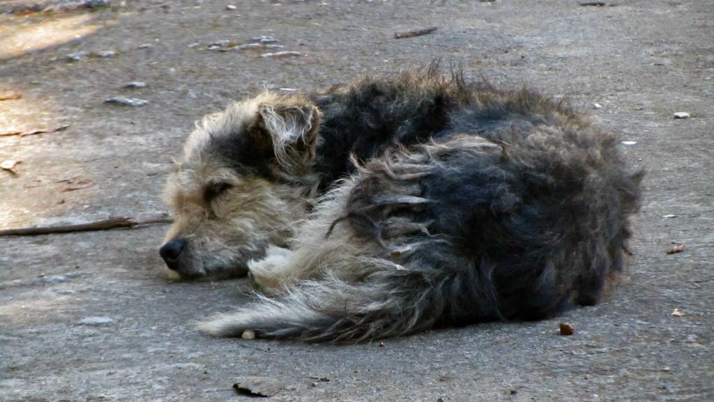 Puppy at pico turquino